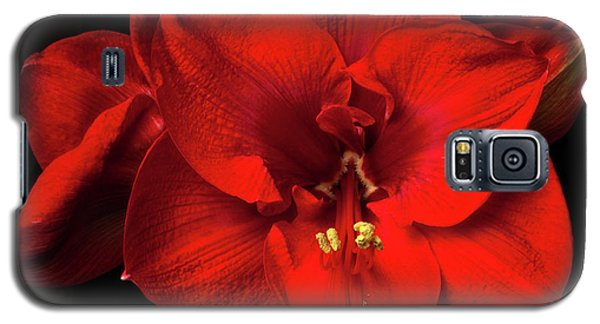 Amaryllis 'merry Christmas Galaxy S5 Case