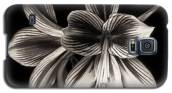 Amaryllis 'papilio Improved' Galaxy S5 Case