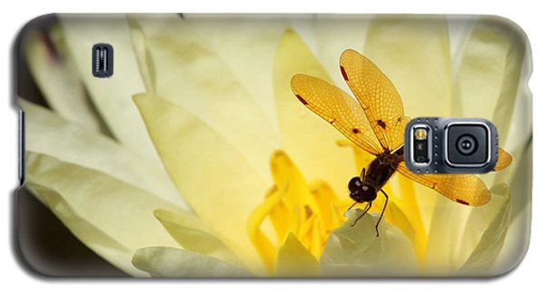 Amber Dragonfly Dancer 2 Galaxy S5 Case