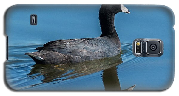 American Coot Swiming Galaxy S5 Case