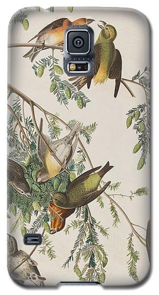 American Crossbill Galaxy S5 Case