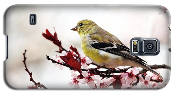 American Goldfinch In Spring Galaxy S5 Case