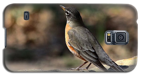 American Robin On Rock Galaxy S5 Case