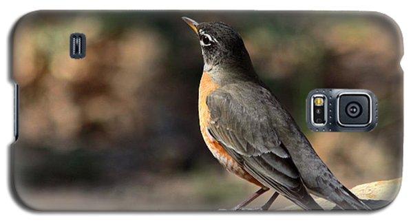 American Robin On Rock Galaxy S5 Case