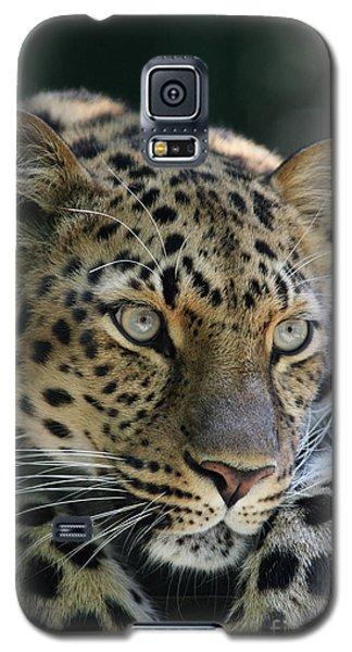 Amur Leopard #2 Galaxy S5 Case