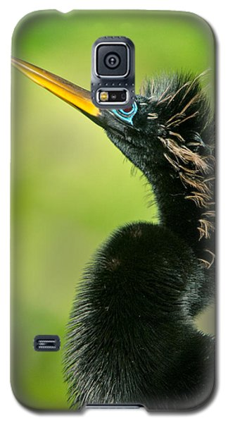 Anhinga Anhinga Anhinga, Tortuguero Galaxy S5 Case by Panoramic Images
