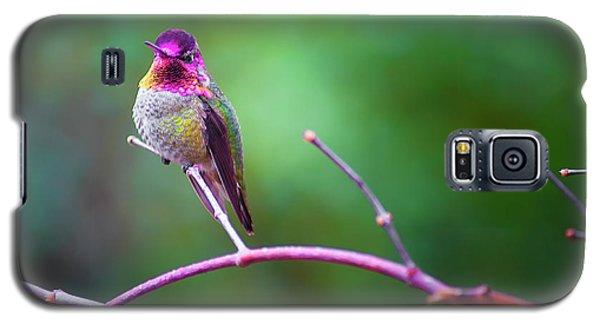 Anna Hummingbird Vii Galaxy S5 Case
