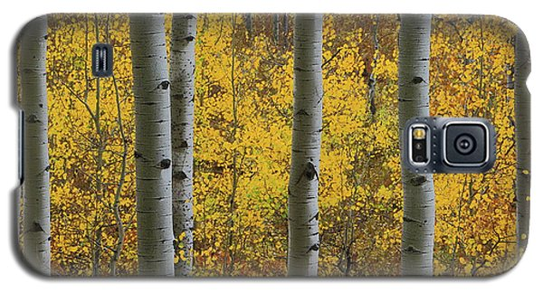 Galaxy S5 Case featuring the photograph Aspen In Autumn At Mcclure Pass by Jetson Nguyen