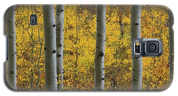 Aspen In Autumn At Mcclure Pass Galaxy S5 Case