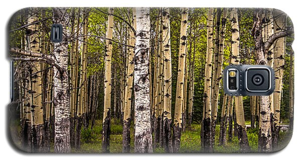 Aspen Trees Canadian Rockies Galaxy S5 Case