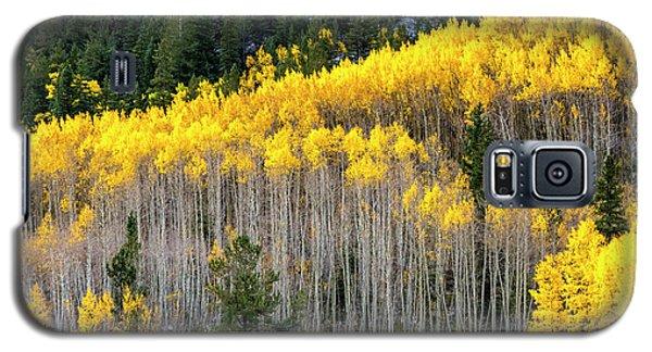 Aspen Trees In Fall Color Galaxy S5 Case