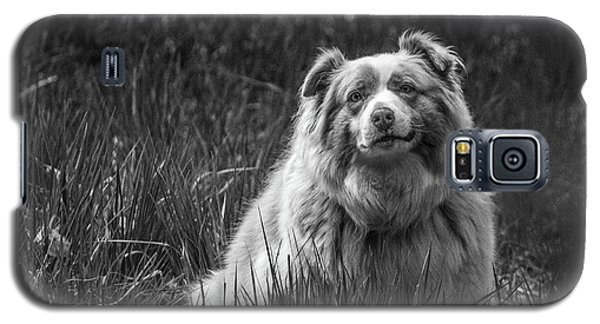 Australian Shepherd Dog Galaxy S5 Case