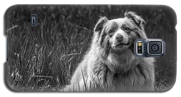 Australian Shepherd Dog Galaxy S5 Case