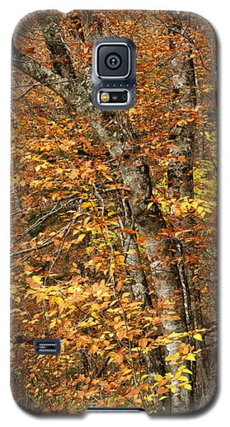 Autumn Colors Galaxy S5 Case by Andrew Soundarajan