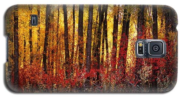 Autumn Light Galaxy S5 Case