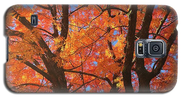 Autumn Orange Galaxy S5 Case
