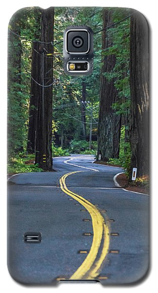 Avenue Of The Giants Galaxy S5 Case