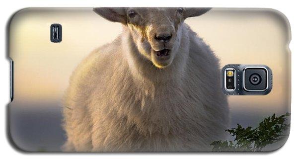 Sheep Galaxy S5 Case - Baa Baa by Angel Ciesniarska