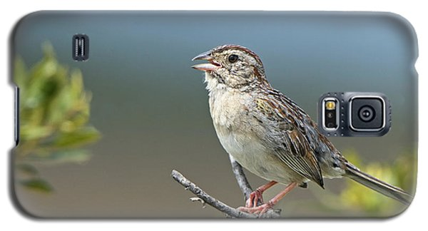 Bachman Sparrow Galaxy S5 Case