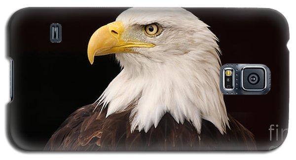 Bald Eagle Galaxy S5 Case by David Warrington