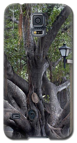 Banyan Tree, Maui Galaxy S5 Case
