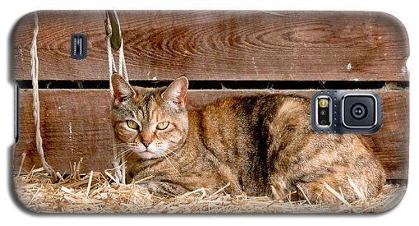 Barn Cat Galaxy S5 Case