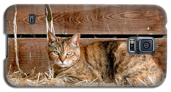 School Galaxy S5 Case - Barn Cat by Jason Freedman