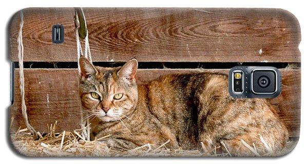 Barn Cat Galaxy S5 Case by Jason Freedman