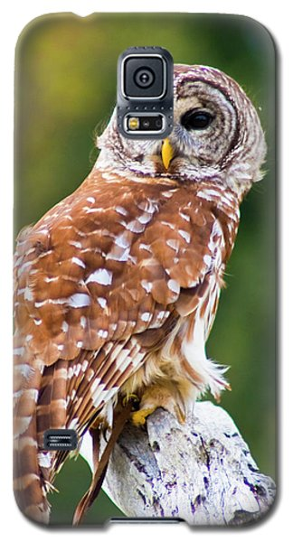 Barred Owl Galaxy S5 Case by Bill Barber