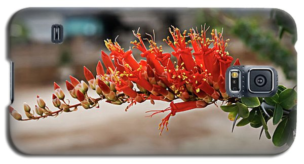 Galaxy S5 Case featuring the photograph Beautiful Ocotillo by Robert Bales