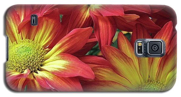 Galaxy S5 Case featuring the photograph Beautiful Trio by Allen Beatty
