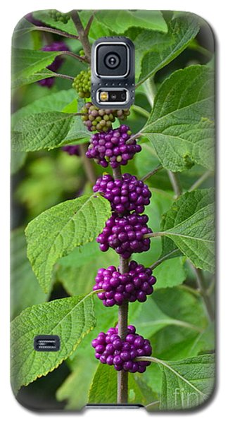 Beautyberry Galaxy S5 Case