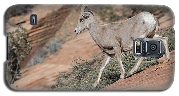 Galaxy S5 Case featuring the photograph Big Horn Sheep by Tyson and Kathy Smith