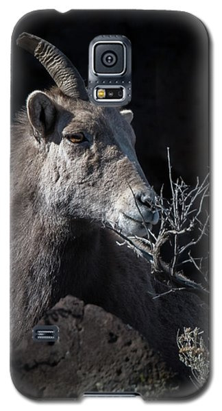 Bighorn Ewe Galaxy S5 Case