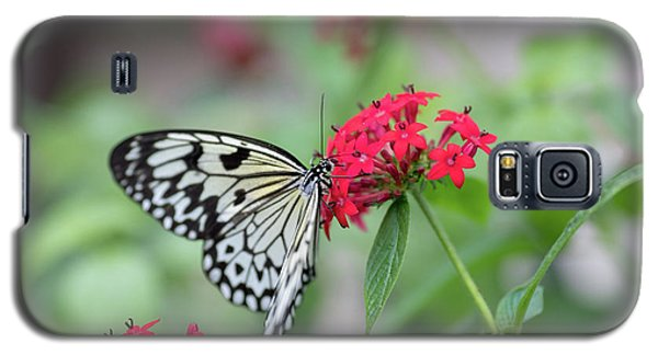 Black And White Butterfly  Galaxy S5 Case