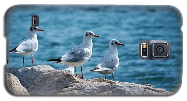 Black-headed Gulls, Chroicocephalus Ridibundus Galaxy S5 Case
