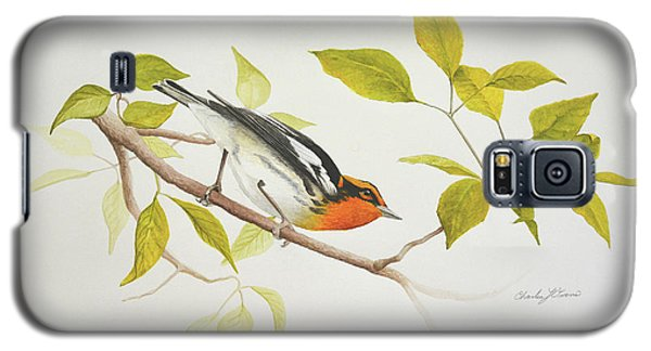 Blackburnian Warbler Galaxy S5 Case