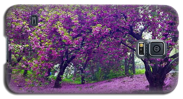 Blossoms In Central Park Galaxy S5 Case