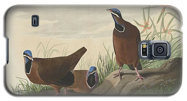 Blue-headed Pigeon Galaxy S5 Case by Anton Oreshkin