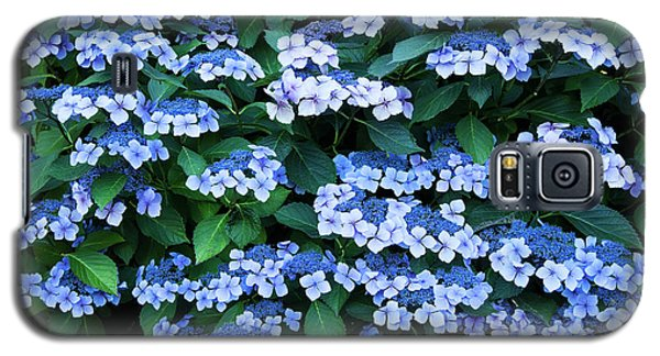 Miksang 12 Blue Hydrangea Galaxy S5 Case by Theresa Tahara