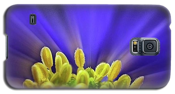 Beautiful Galaxy S5 Case - blue Shades - An Anemone Blanda by John Edwards