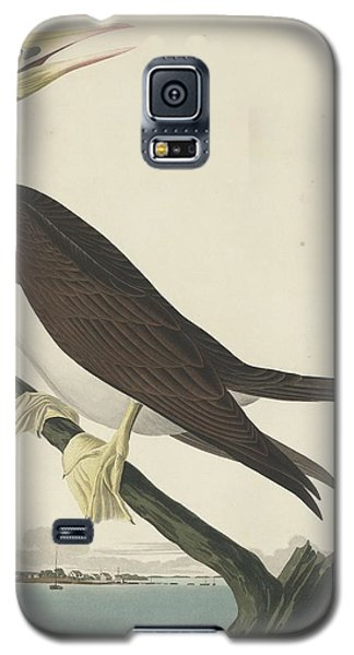 Booby Gannet Galaxy S5 Case