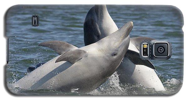 Bottlenose Dolphins  - Scotland  #15 Galaxy S5 Case