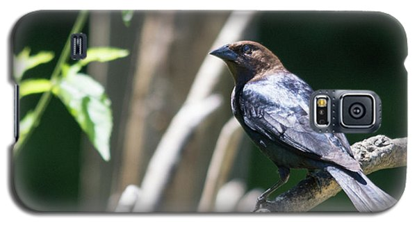 Brown-headed Cowbird Galaxy S5 Case