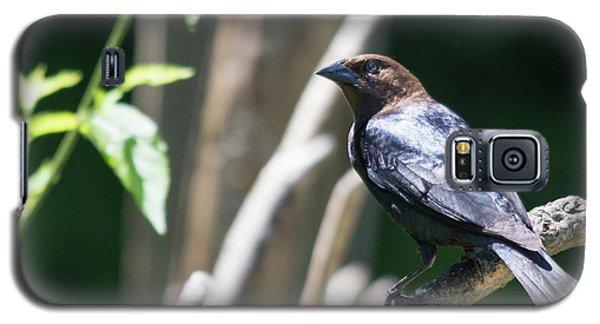 Brown-headed Cowbird Galaxy S5 Case