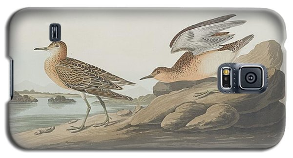 Buff-breasted Sandpiper Galaxy S5 Case by Dreyer Wildlife Print Collections