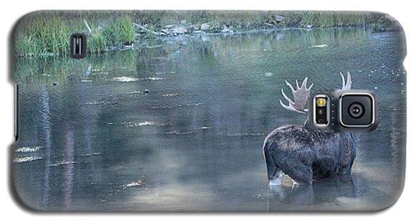 Bull Moose Reflection Galaxy S5 Case