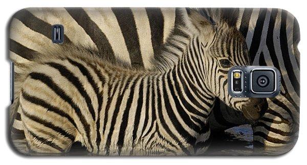 Burchells Zebra Equus Burchellii Foal Galaxy S5 Case