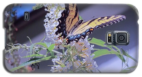 Butterfly Bush ,butterfly Included Galaxy S5 Case by Melissa Messick