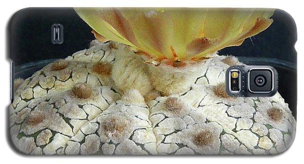 Cactus Flower 1 Galaxy S5 Case by Selena Boron